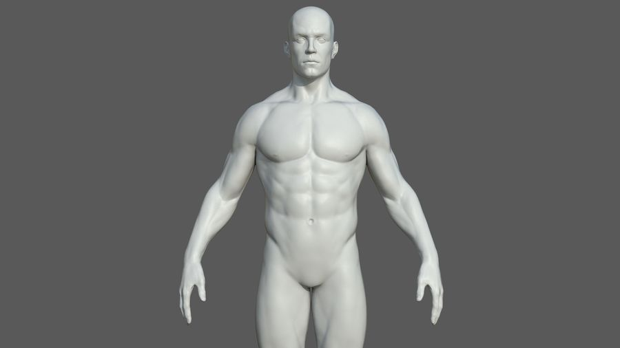 Character - Male Anatomy Body Base HighPoly royalty-free 3d model - Preview no. 36