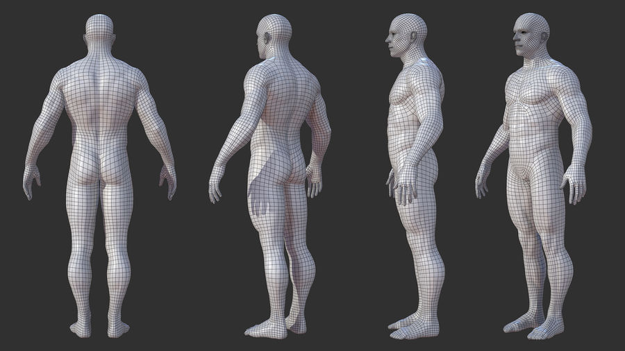 Character - Male Anatomy Body Base HighPoly royalty-free 3d model - Preview no. 13
