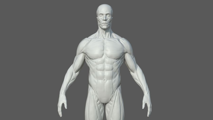 Character - Male Anatomy Body Base HighPoly royalty-free 3d model - Preview no. 12