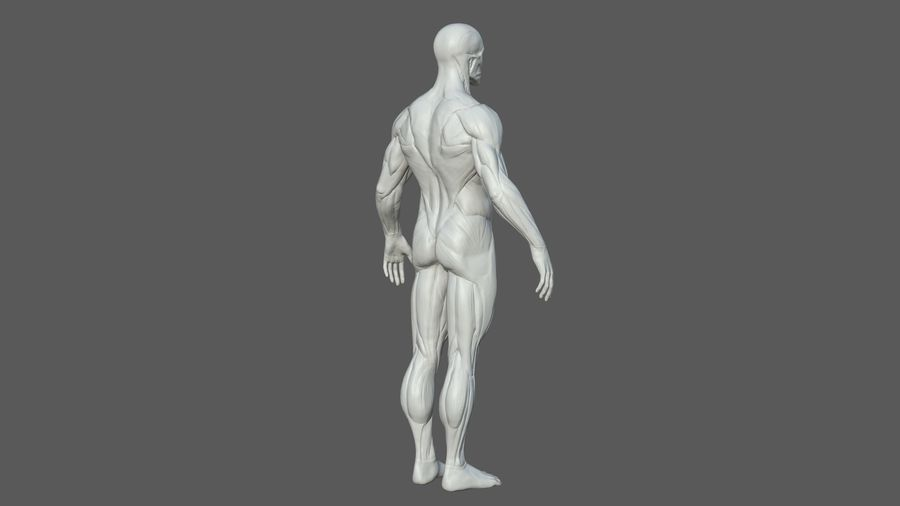 Character - Male Anatomy Body Base HighPoly royalty-free 3d model - Preview no. 9