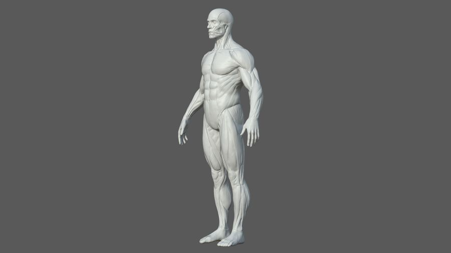 Character - Male Anatomy Body Base HighPoly royalty-free 3d model - Preview no. 5