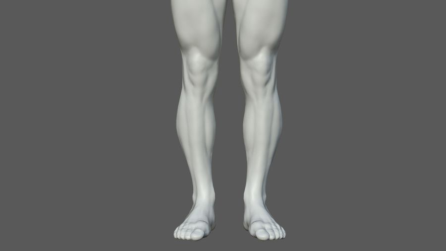 Character - Male Anatomy Body Base HighPoly royalty-free 3d model - Preview no. 40
