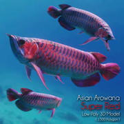 Aziatische Arowana Super Red 3d model