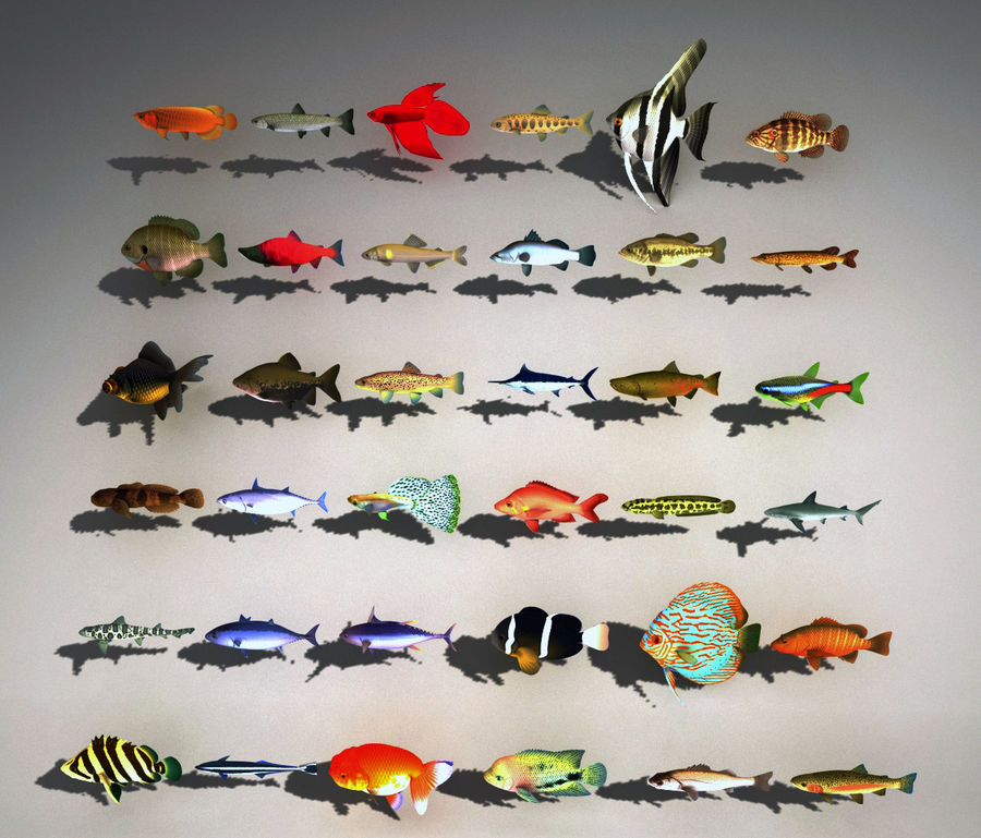 fish asset royalty-free 3d model - Preview no. 3