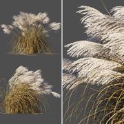 Miscanthus sinensis dry 3d model