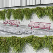 Creeper Plants 9: Phyllanthus (+GrowFX) 3d model