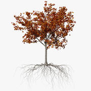 Maple Autumn 3 3d model