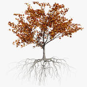 Maple Autumn 2 3d model