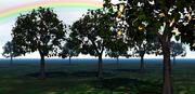 Apple Tree W/  Materials  3d model