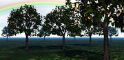 苹果树/材料 3d model