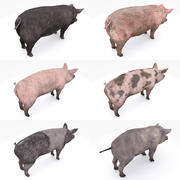 Pig collection 3d model