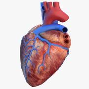 Модель человеческого сердца 3d model