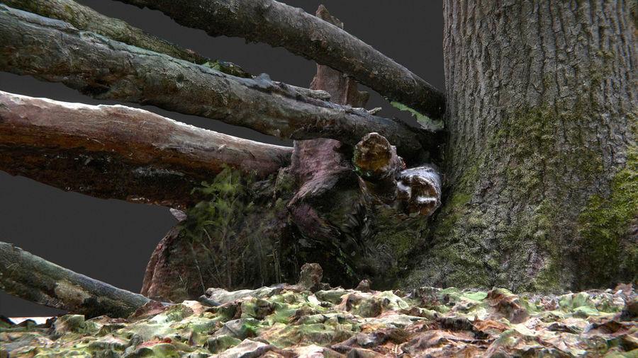 Banco di tronchi nella foresta royalty-free 3d model - Preview no. 12