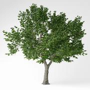 灰の木 3d model