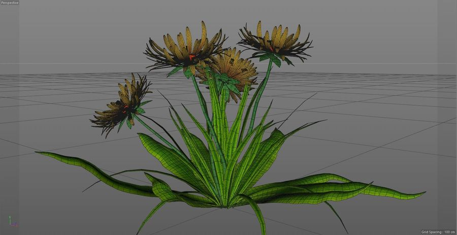 Одуванчик Желтый цветок royalty-free 3d model - Preview no. 6