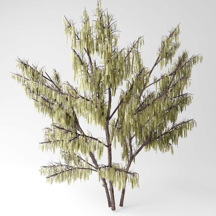 Hazel tree royalty-free 3d model - Preview no. 5