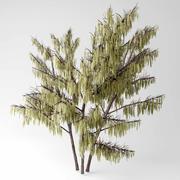 Fındık ağacı 3d model
