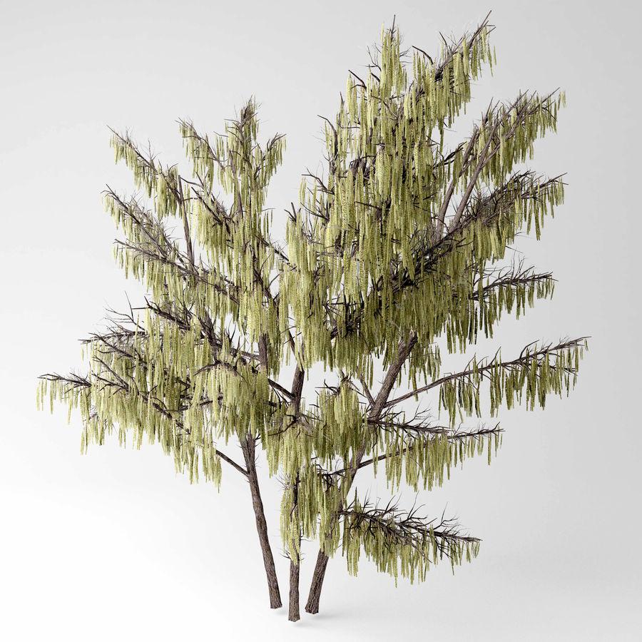 Hazel tree royalty-free 3d model - Preview no. 1