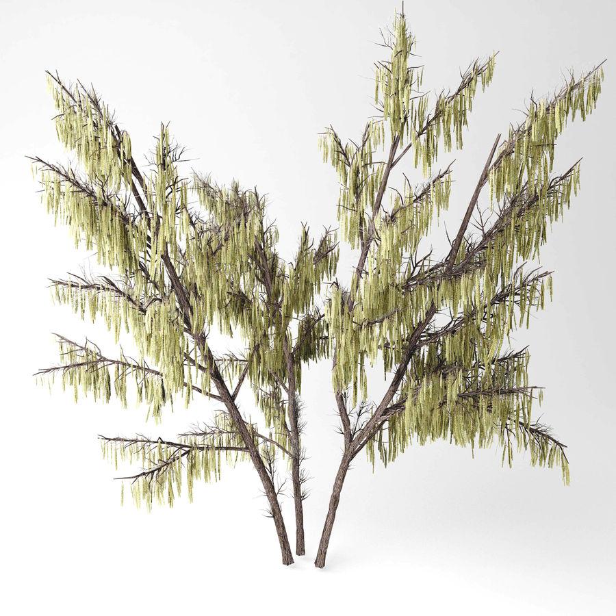 Hazel tree royalty-free 3d model - Preview no. 3