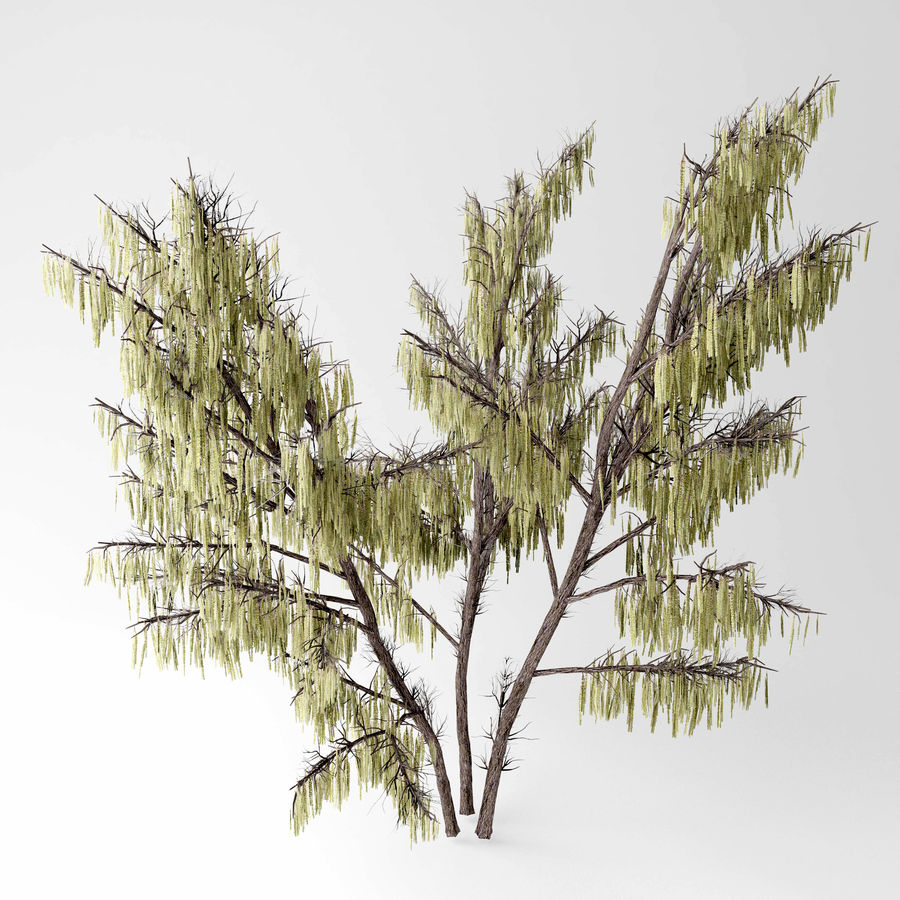 Hazel tree royalty-free 3d model - Preview no. 4