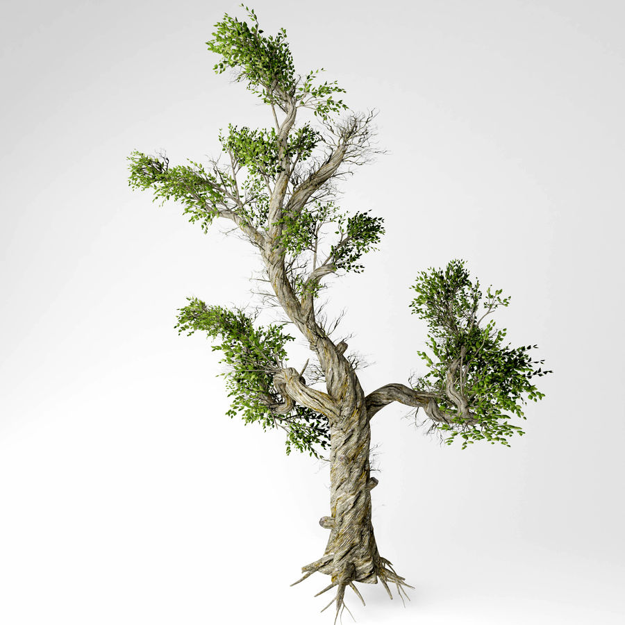 Honey tree royalty-free 3d model - Preview no. 4