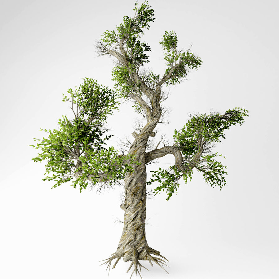 Honey tree royalty-free 3d model - Preview no. 1