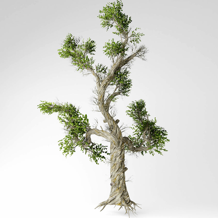 Honey tree royalty-free 3d model - Preview no. 3