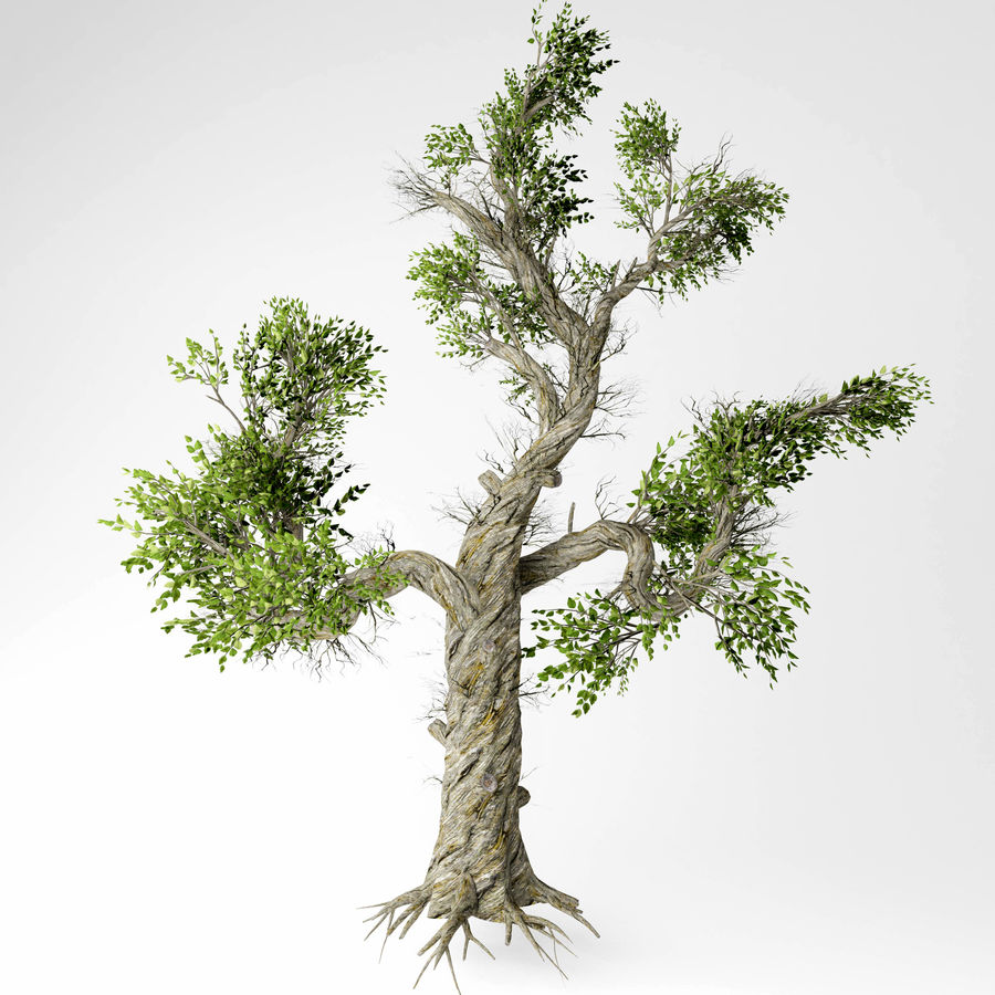Honey tree royalty-free 3d model - Preview no. 2