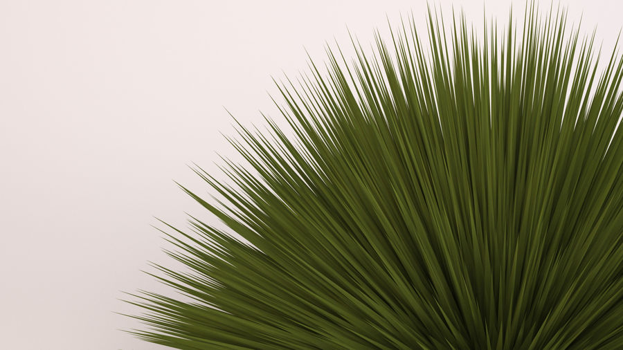 Deer Grass royalty-free 3d model - Preview no. 6