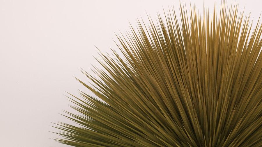 Prairie Fire Grass royalty-free 3d model - Preview no. 6