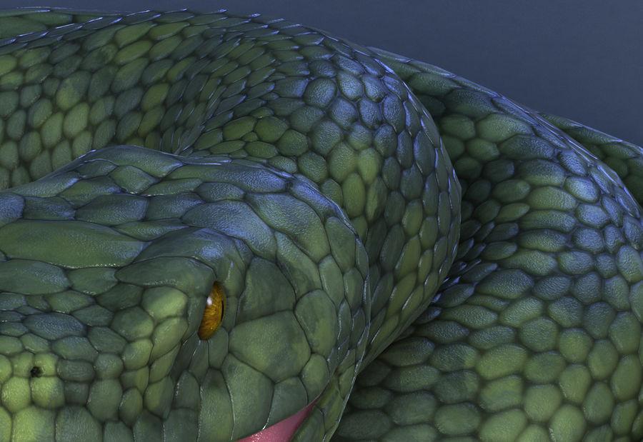 snake green bamboo snake reptile animal boa constrictor royalty-free 3d model - Preview no. 8