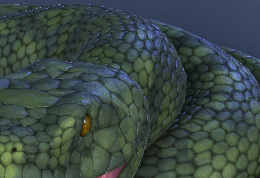 snake green bamboo snake reptile animal boa constrictor royalty-free 3d model - Preview no. 8