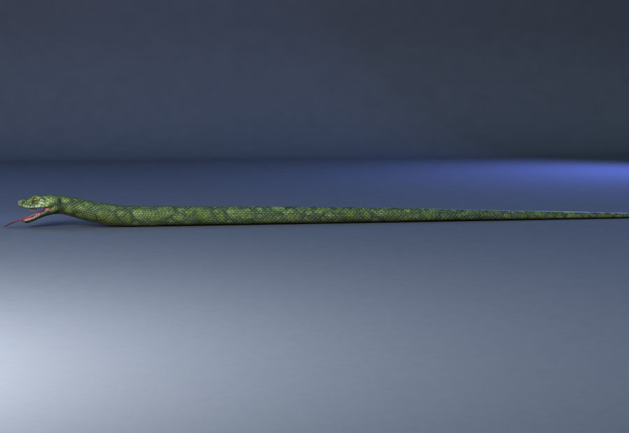 snake green bamboo snake reptile animal boa constrictor royalty-free 3d model - Preview no. 6
