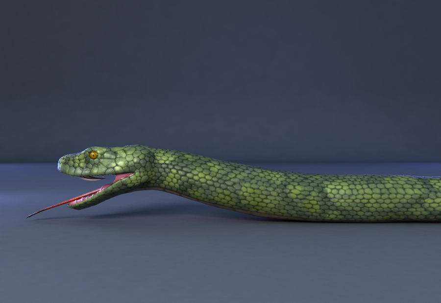 snake green bamboo snake reptile animal boa constrictor royalty-free 3d model - Preview no. 5