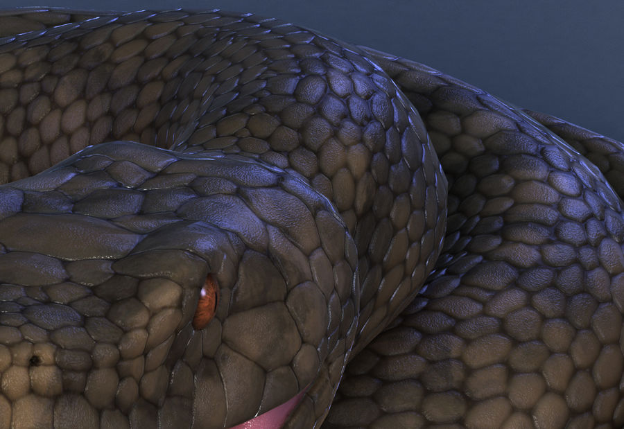 snake reptile animal boa constrictor royalty-free 3d model - Preview no. 7