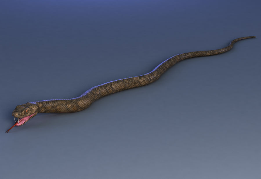 snake reptile animal boa constrictor royalty-free 3d model - Preview no. 8