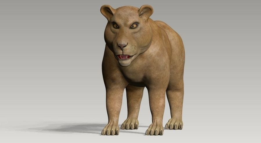 lion and lioness royalty-free 3d model - Preview no. 6