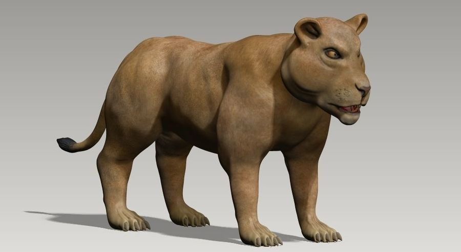 lion and lioness royalty-free 3d model - Preview no. 2