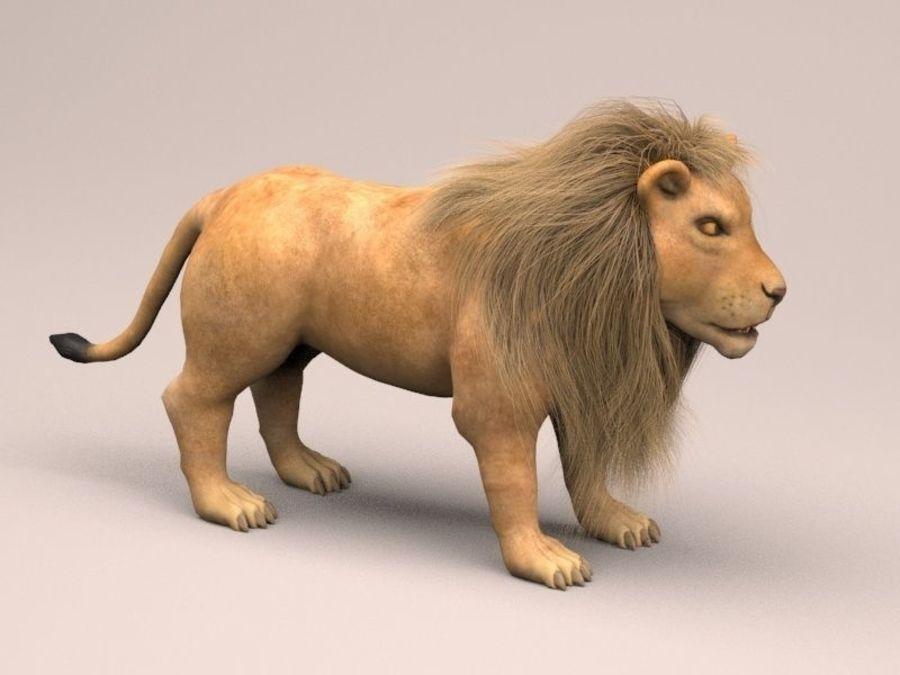 lion and lioness royalty-free 3d model - Preview no. 7
