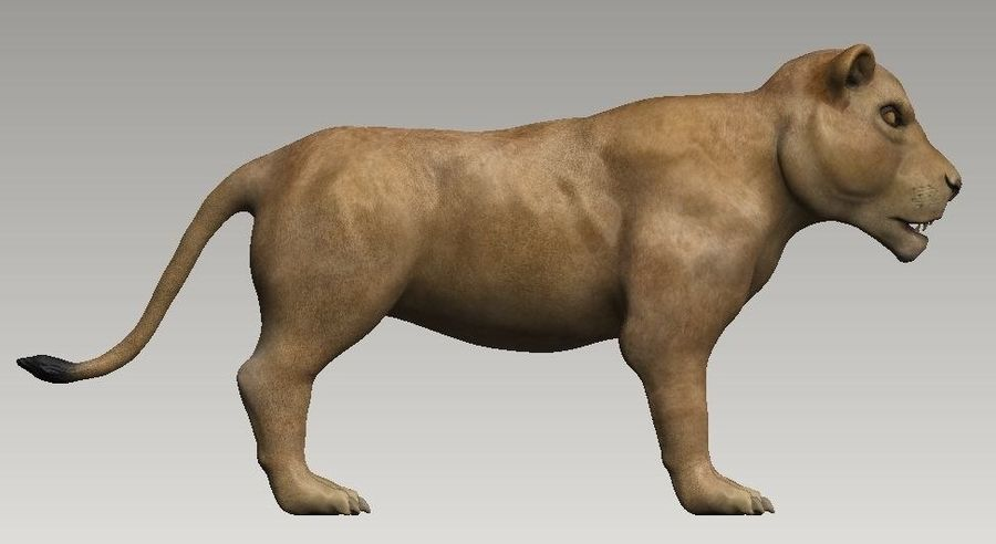 lion and lioness royalty-free 3d model - Preview no. 5