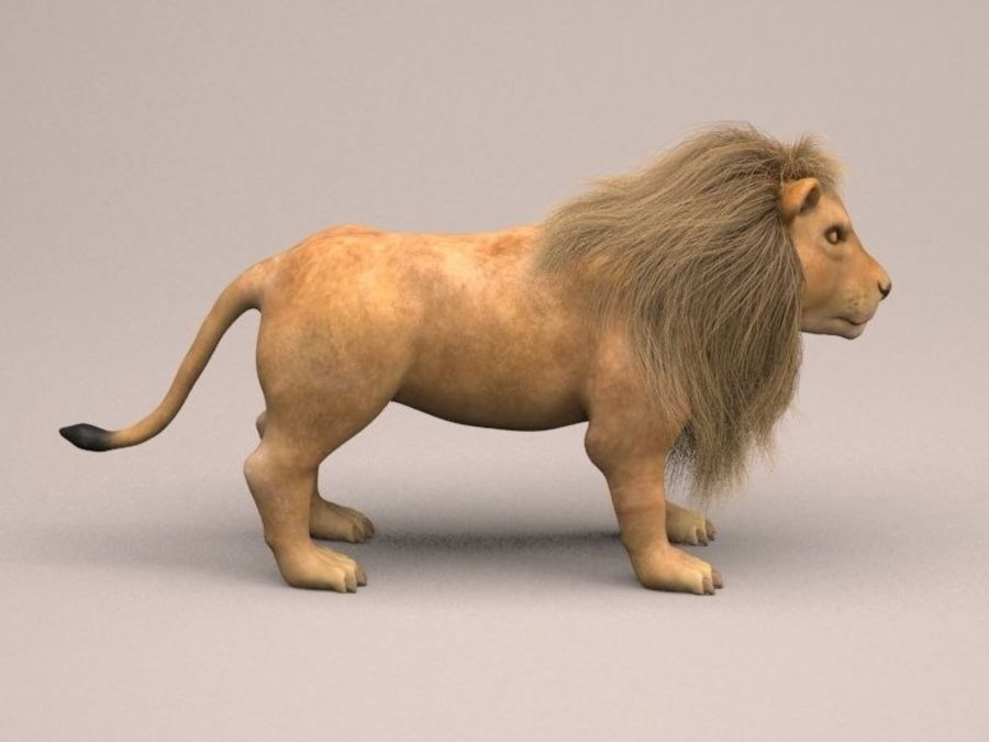 lion and lioness royalty-free 3d model - Preview no. 8