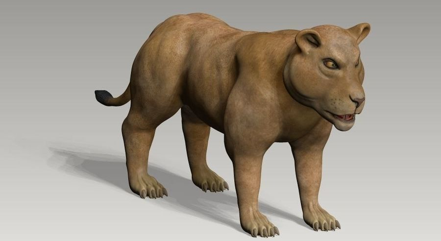 lion and lioness royalty-free 3d model - Preview no. 3