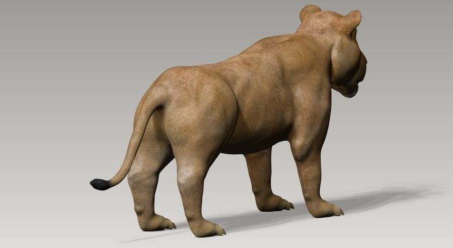 lion and lioness royalty-free 3d model - Preview no. 4