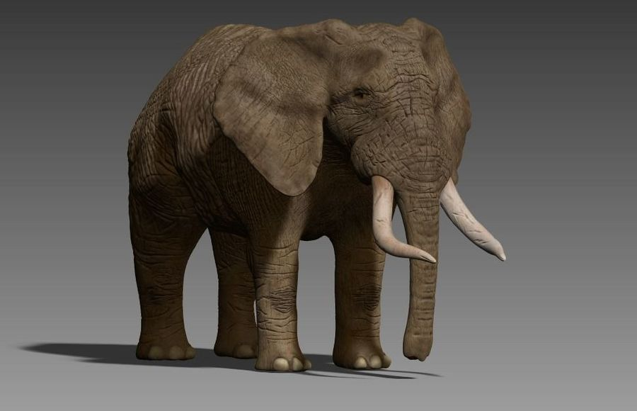 elefante marrone royalty-free 3d model - Preview no. 10