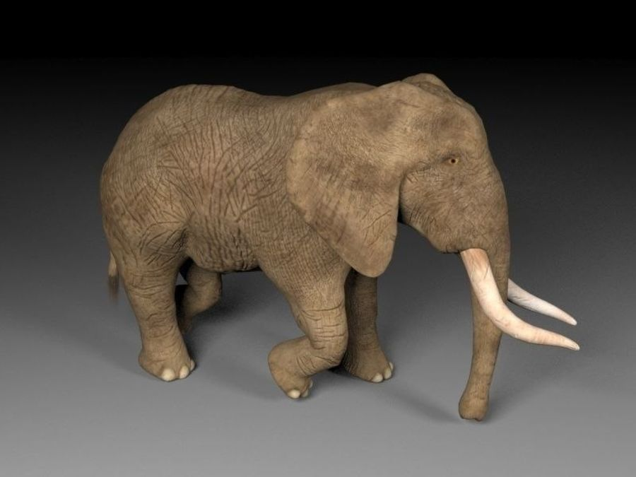 elefante marrone royalty-free 3d model - Preview no. 7