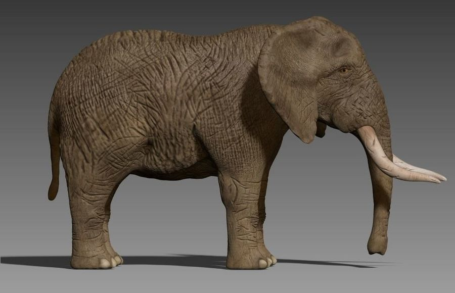 elefante marrone royalty-free 3d model - Preview no. 3
