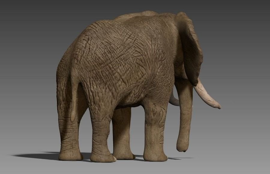 elefante marrone royalty-free 3d model - Preview no. 9