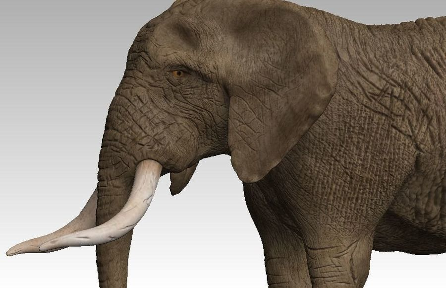 elefante marrone royalty-free 3d model - Preview no. 4