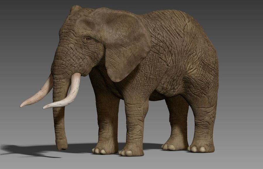 elefante marrone royalty-free 3d model - Preview no. 6