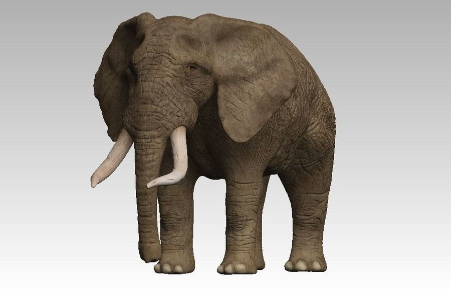 elefante marrone royalty-free 3d model - Preview no. 1